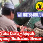 Tata Cara Aqiqah yang Baik dan Benar (www.hargakambingaqiqah.com)